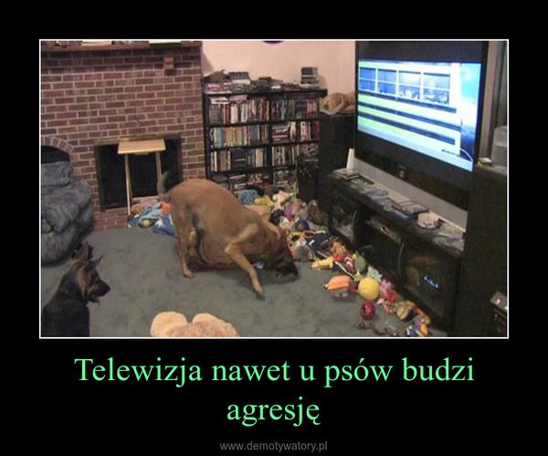 Telewizja nawet u psów budzi agresję –