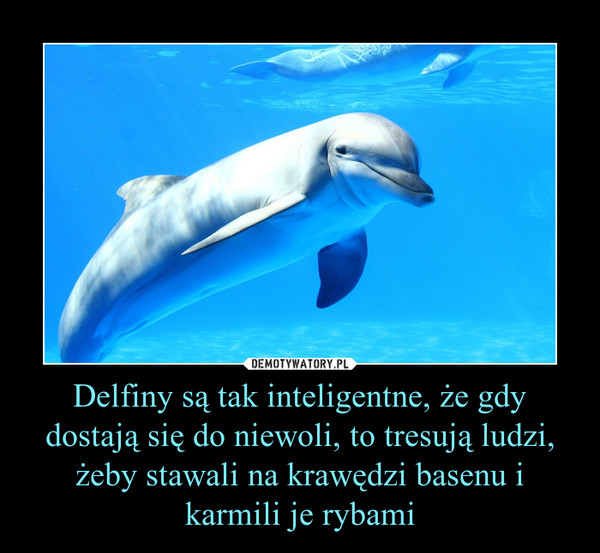 Delfiny są tak inteligentne, że gdy dostają się do niewoli, to tresują ludzi, żeby stawali na krawędzi basenu i karmili je rybami –