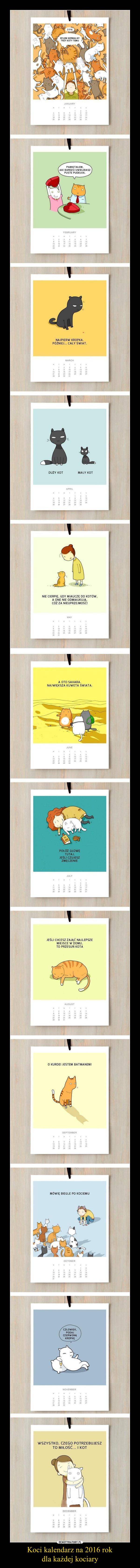 Koci kalendarz na 2016 rokdla każdej kociary –