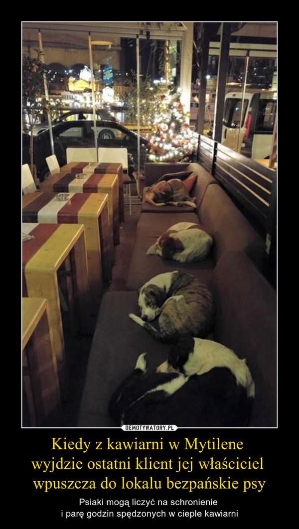 Kiedy z kawiarni w Mytilene wyjdzie ostatni klient jej właściciel wpuszcza do lokalu bezpańskie psy – Psiaki mogą liczyć na schronienie i parę godzin spędzonych w cieple kawiarni
