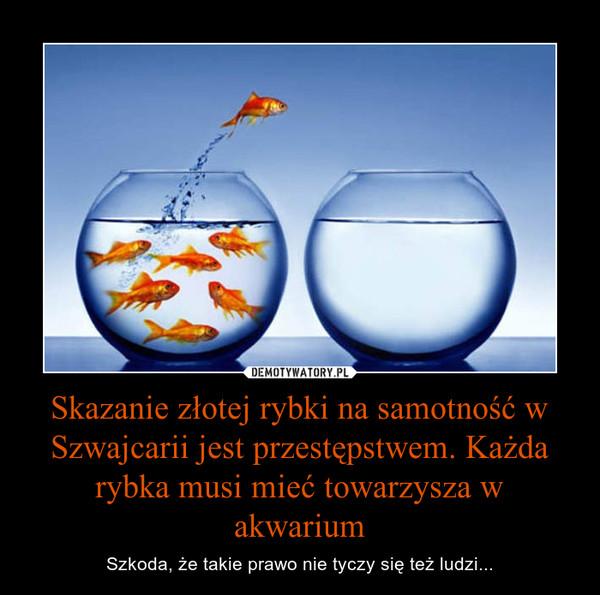 Skazanie złotej rybki na samotność w Szwajcarii jest przestępstwem. Każda rybka musi mieć towarzysza w akwarium – Szkoda, że takie prawo nie tyczy się też ludzi...