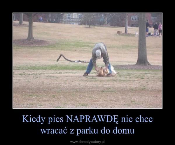 Kiedy pies NAPRAWDĘ nie chce wracać z parku do domu –