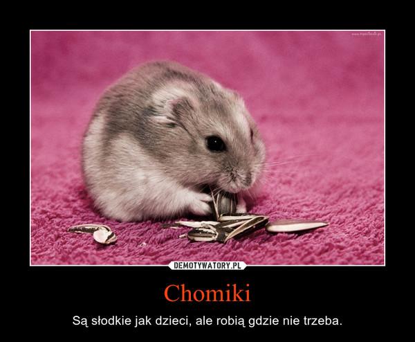 Chomiki – Są słodkie jak dzieci, ale robią gdzie nie trzeba.
