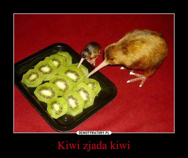Kiwi zjada kiwi –