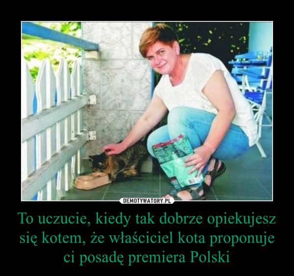 To uczucie, kiedy tak dobrze opiekujesz się kotem, że właściciel kota proponuje ci posadę premiera Polski –