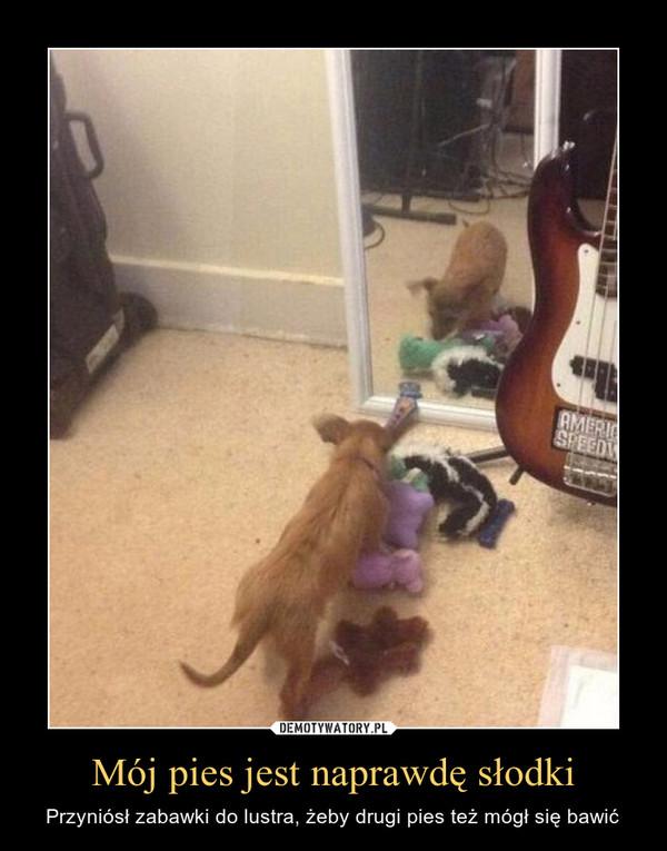 Mój pies jest naprawdę słodki – Przyniósł zabawki do lustra, żeby drugi pies też mógł się bawić