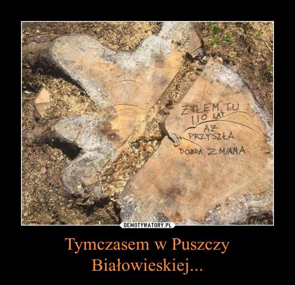 Tymczasem w Puszczy Białowieskiej... –  ŻYŁEM TU 110 LAT AŻ PRZYSZŁA DOBRA ZMIANA