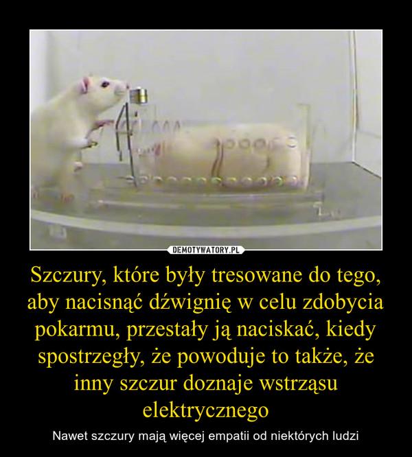 Szczury, które były tresowane do tego, aby nacisnąć dźwignię w celu zdobycia pokarmu, przestały ją naciskać, kiedy spostrzegły, że powoduje to także, że inny szczur doznaje wstrząsu elektrycznego – Nawet szczury mają więcej empatii od niektórych ludzi