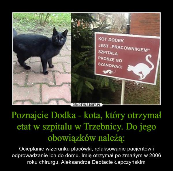"""Poznajcie Dodka - kota, który otrzymał etat w szpitalu w Trzebnicy. Do jego obowiązków należą: – Ocieplanie wizerunku placówki, relaksowanie pacjentów i odprowadzanie ich do domu. Imię otrzymał po zmarłym w 2006 roku chirurgu, Aleksandrze Deotacie Łapczyńskim KOT DODEK JEST """"PRACOWNIKIEM"""" SZPITALA PROSZĘ GO SZANOWAĆ!"""