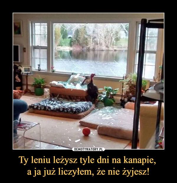 Ty leniu leżysz tyle dni na kanapie, a ja już liczyłem, że nie żyjesz! –