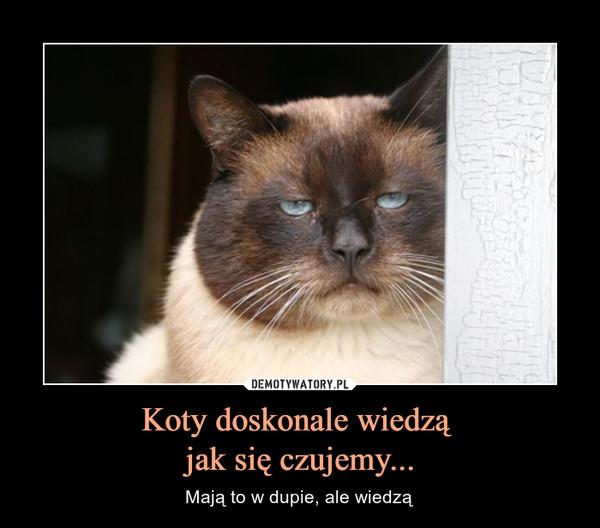 Koty doskonale wiedzą jak się czujemy... – Mają to w dupie, ale wiedzą