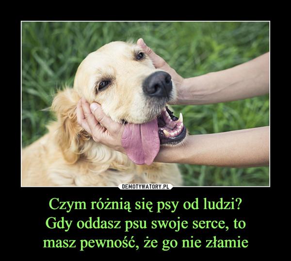 Czym różnią się psy od ludzi?Gdy oddasz psu swoje serce, tomasz pewność, że go nie złamie –
