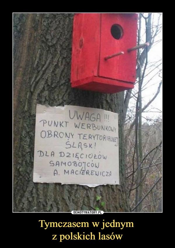 Tymczasem w jednym z polskich lasów –