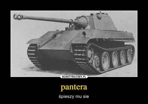 pantera – śpieszy mu sie