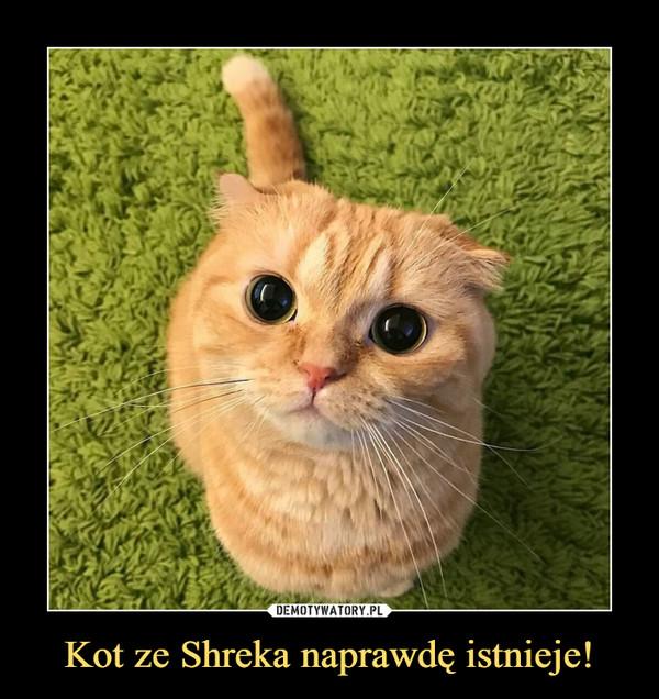 Kot Ze Shreka Naprawdę Istnieje Demotywatorypl