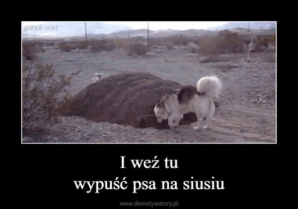 I weź tuwypuść psa na siusiu –