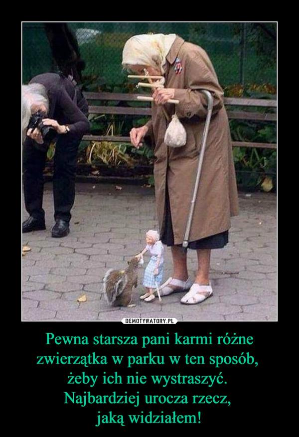 Pewna starsza pani karmi różne zwierzątka w parku w ten sposób, żeby ich nie wystraszyć. Najbardziej urocza rzecz, jaką widziałem! –