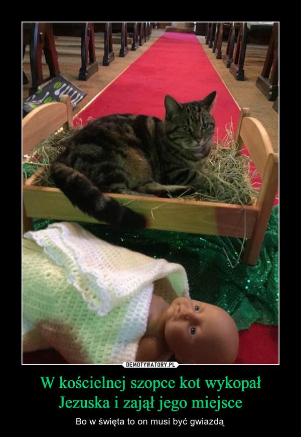 W kościelnej szopce kot wykopał Jezuska i zajął jego miejsce – Bo w święta to on musi być gwiazdą