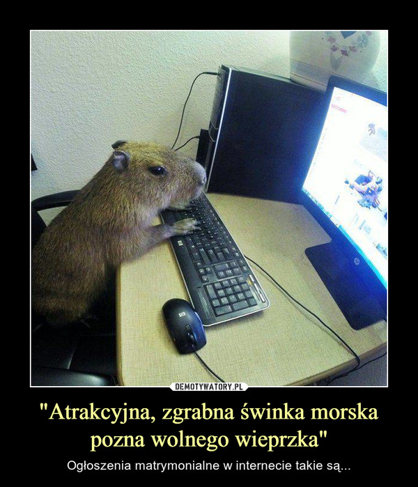 """""""Atrakcyjna, zgrabna świnka morska pozna wolnego wieprzka"""" – Ogłoszenia matrymonialne w internecie takie są..."""