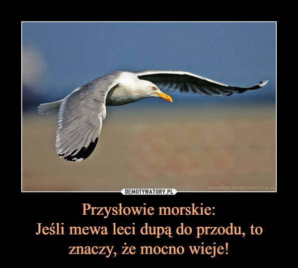 Przysłowie morskie:Jeśli mewa leci dupą do przodu, toznaczy, że mocno wieje! –