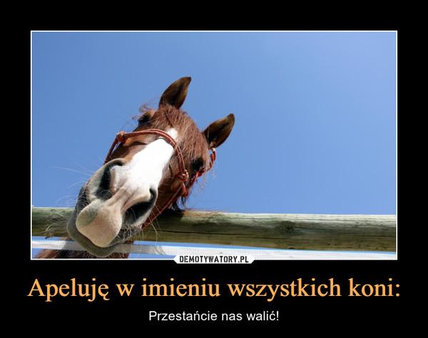 Apeluję w imieniu wszystkich koni: – Przestańcie nas walić!