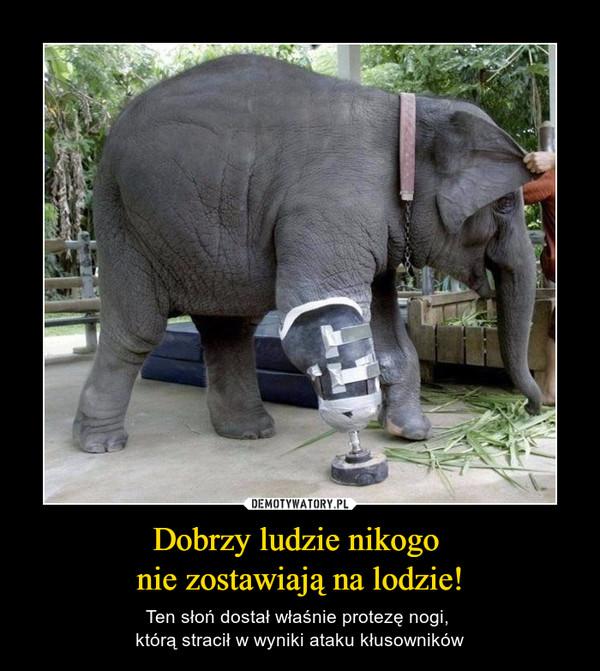 Dobrzy ludzie nikogo nie zostawiają na lodzie! – Ten słoń dostał właśnie protezę nogi, którą stracił w wyniki ataku kłusowników