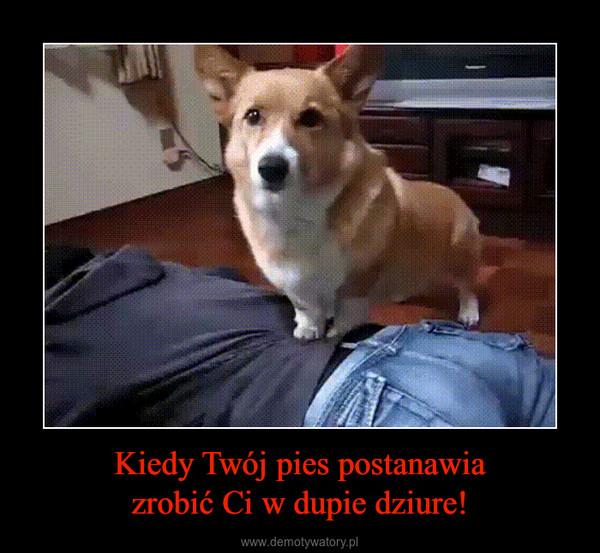 Kiedy Twój pies postanawiazrobić Ci w dupie dziure! –