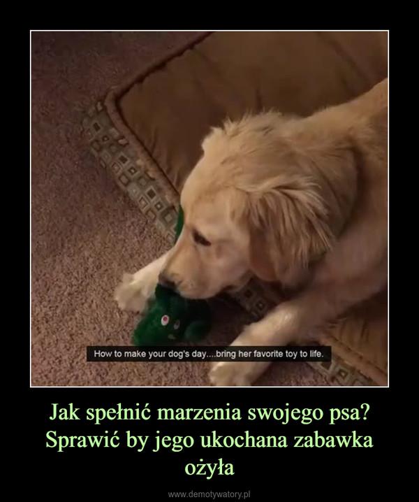 Jak spełnić marzenia swojego psa?Sprawić by jego ukochana zabawka ożyła –