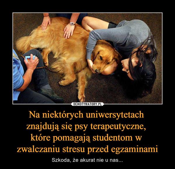 Na niektórych uniwersytetach znajdują się psy terapeutyczne, które pomagają studentom w zwalczaniu stresu przed egzaminami – Szkoda, że akurat nie u nas...