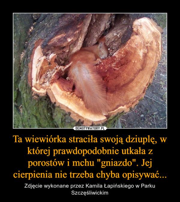 """Ta wiewiórka straciła swoją dziuplę, w której prawdopodobnie utkała z porostów i mchu """"gniazdo"""". Jej cierpienia nie trzeba chyba opisywać... – Zdjęcie wykonane przez Kamila Łapińskiego w Parku Szczęśliwickim"""