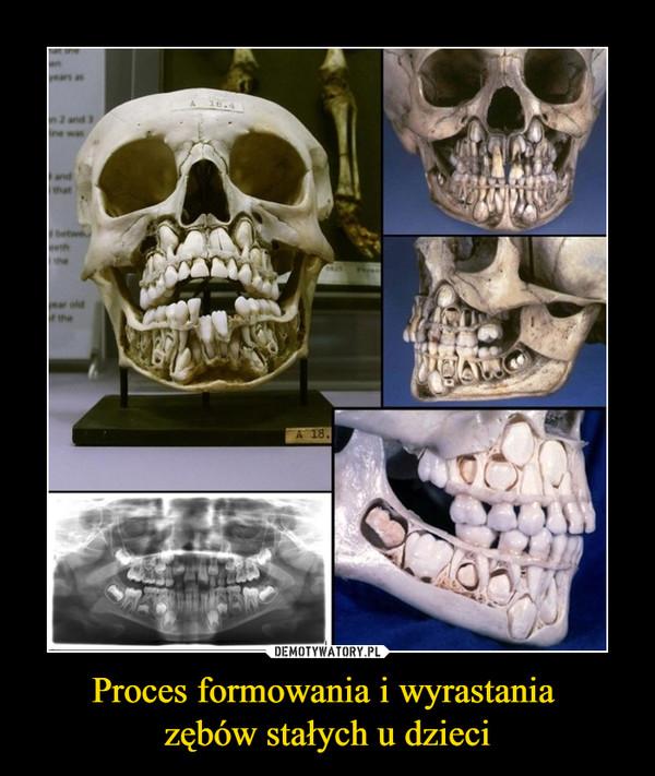 Proces formowania i wyrastania zębów stałych u dzieci –