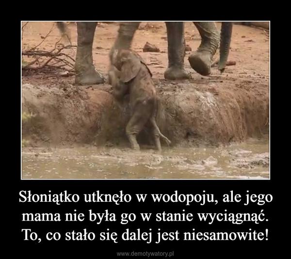 Słoniątko utknęło w wodopoju, ale jego mama nie była go w stanie wyciągnąć. To, co stało się dalej jest niesamowite! –