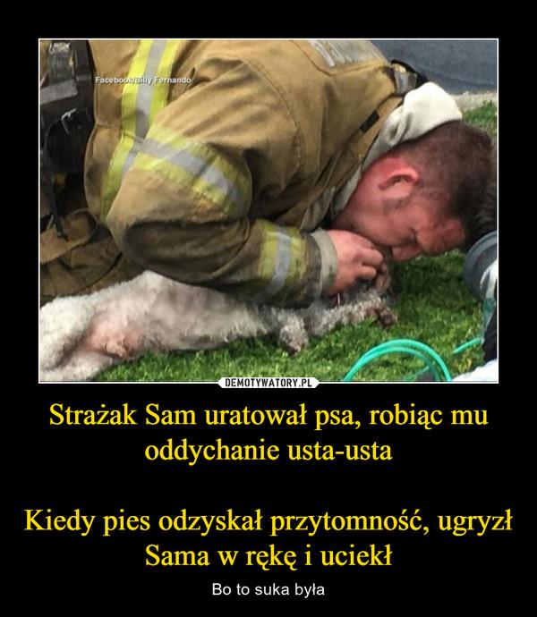Strażak Sam uratował psa, robiąc mu oddychanie usta-ustaKiedy pies odzyskał przytomność, ugryzł Sama w rękę i uciekł – Bo to suka była