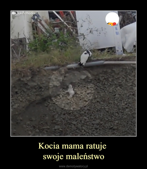 Kocia mama ratuje swoje maleństwo –