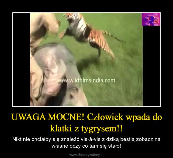 UWAGA MOCNE! Człowiek wpada do klatki z tygrysem!! – Nikt nie chciałby się znaleźć vis-à-vis z dziką bestią zobacz na własne oczy co tam się stało!