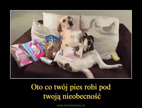 Oto co twój pies robi pod twoją nieobecność –