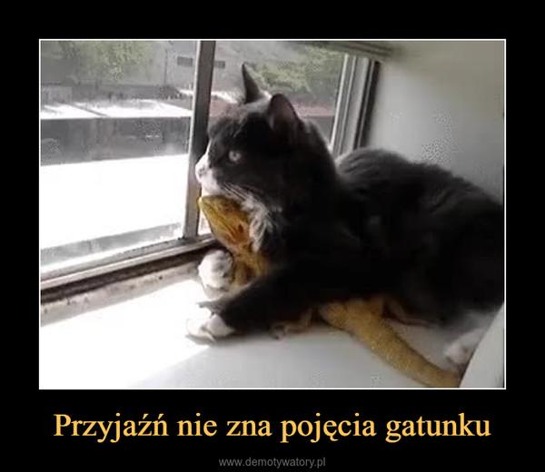 Przyjaźń nie zna pojęcia gatunku –