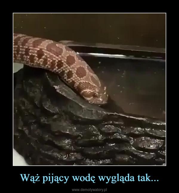 Wąż pijący wodę wygląda tak... –