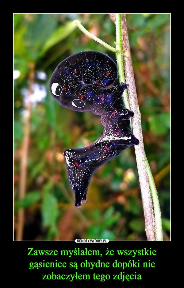 Zawsze myślałem, że wszystkie gąsienice są ohydne dopóki nie zobaczyłem tego zdjęcia –