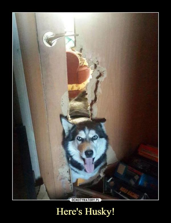 Here's Husky! –