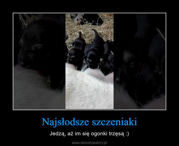Najsłodsze szczeniaki – Jedzą, aż im się ogonki trzęsą :)