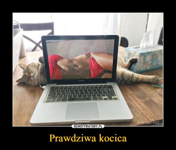 Prawdziwa kocica –