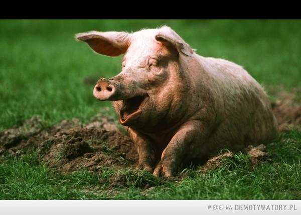 Człowiek to taki zwierz, co przerabia mięso na świnię. –