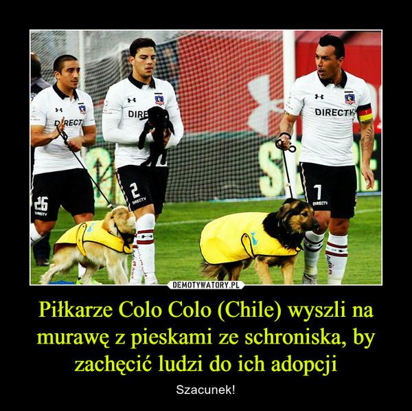 Piłkarze Colo Colo (Chile) wyszli na murawę z pieskami ze schroniska, by zachęcić ludzi do ich adopcji – Szacunek!