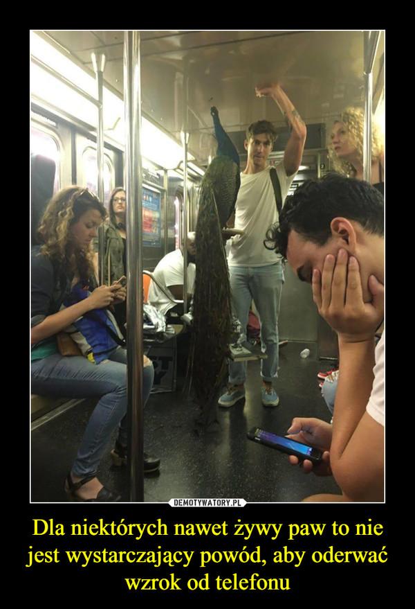 Dla niektórych nawet żywy paw to nie jest wystarczający powód, aby oderwać wzrok od telefonu –