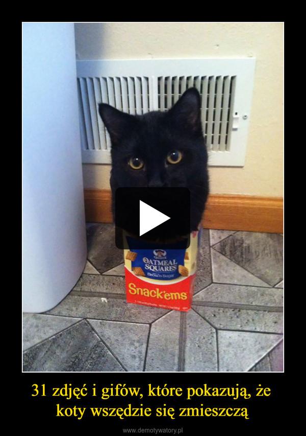 31 zdjęć i gifów, które pokazują, że koty wszędzie się zmieszczą –