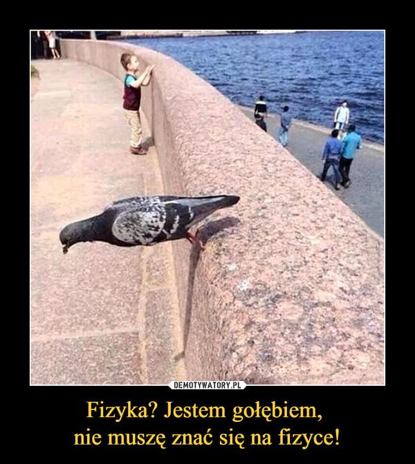 Fizyka? Jestem gołębiem, nie muszę znać się na fizyce! –