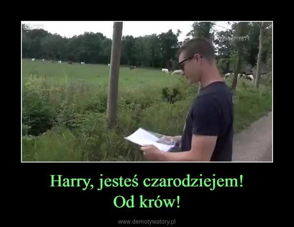 Harry, jesteś czarodziejem!Od krów! –