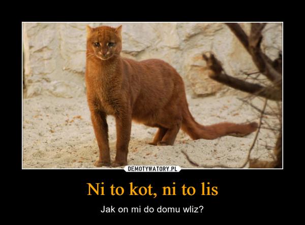 Ni to kot, ni to lis – Jak on mi do domu wliz?