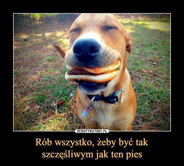 Rób wszystko, żeby być takszczęśliwym jak ten pies –